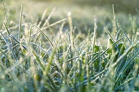winter lawn care winter lawn care in cheshire