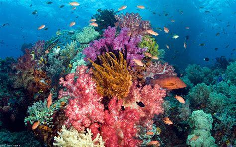 colorful coral reef wallpaper wallpapersafari