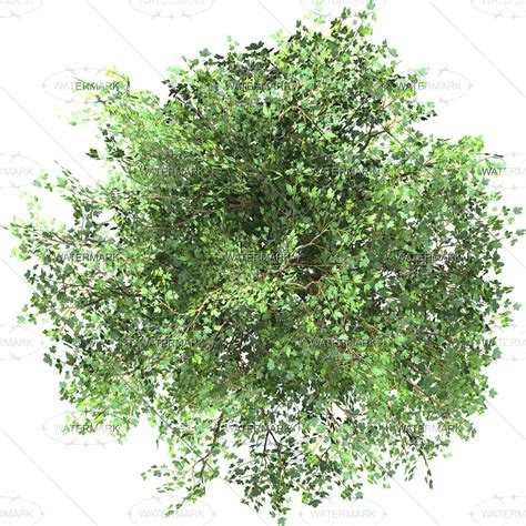 png tree top mđ c 226 y thể hiện đ a pinterest medium and html