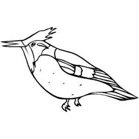kingfisher coloring pages kingfisher coloring sheet