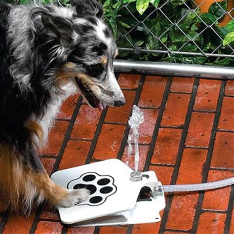 new technology for dogs coolest latest gadgets dog self serve water fountain