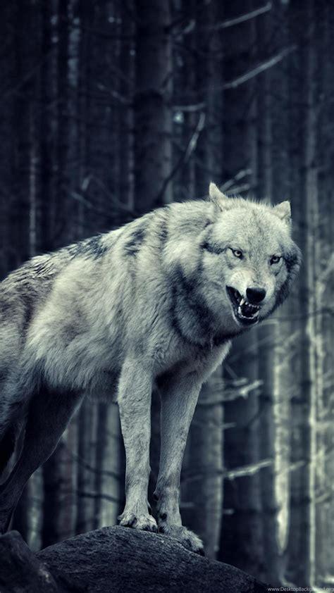 wolf wallpaper iphone  animals wolf iphone