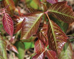 avoiding rash decisions  guide  plants  shouldnt
