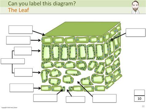 biology diagrams pdf biology diagrams pdf best free home design idea