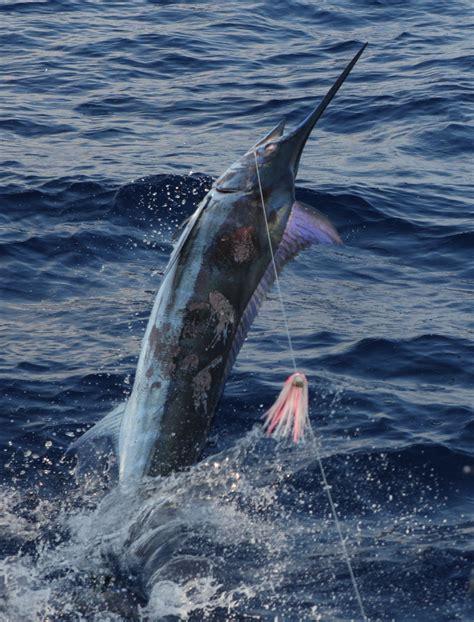 northern lights boat kona patti does it again fishing report