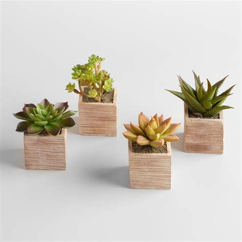 pots for succulents for sale mini succulent pots set of 4 world market