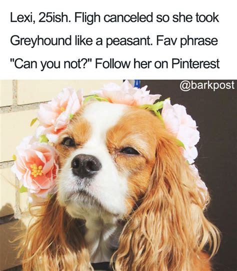 funny bio for dog instagram 10 dog bios that will hilariously remind you of somebody