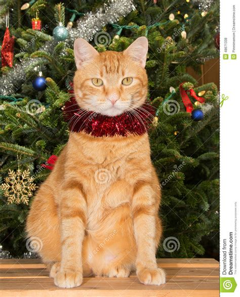 orange tabby cat sitting in front of a christmas tree