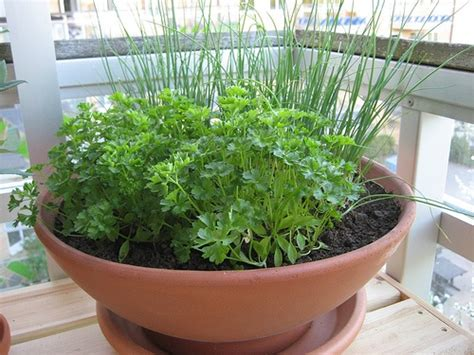 Small Herb Garden Garden Ideas Pinterest Small Herb Garden Ideas