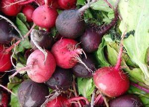 vitamina b12 alimenti vegani gli alimenti vegan sono ad alto contenuto di vitamina