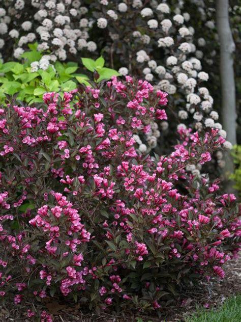 14 flowering shrubs for sun hgtv - Flowers And Shrubs For Sun