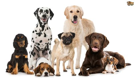 what is the best family best breeds for families pets4homes