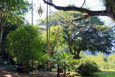 Waimea Botanical Garden Aboutorchids 187 Archive 187 Waimea Valley And Waimea Falls