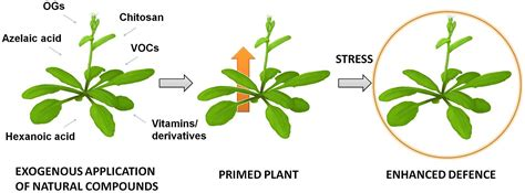 frontiers priming of plant resistance by natural