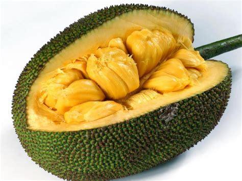 protein jackfruit jackfruit nutrition information eat this much