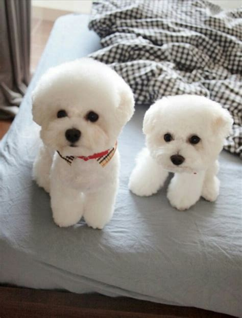 real puppy which of the two is the real aww