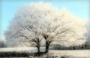 white tree opprinnelige bakgrunnsbilde god jul 3479