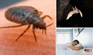 where did bed bugs originate bats are the origin of bed bugs study claims daily mail