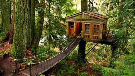 adventures in the construction world a house built out of build the ultimate adult treehouse primitive survivors