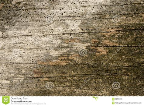 forrest woodworker wood structure stock photo image 62196039