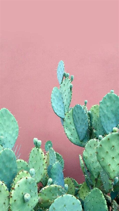 Wallpaper For Iphone Cactus | cjspaced0ut a rose is a rose is a rose