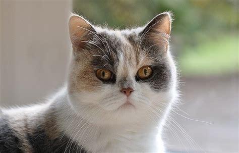 alimentazione per pancreatite alimentazione gatto con pancreatite dogalize