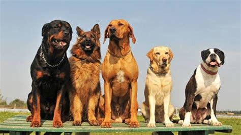 types of purebred dogs how to adopt a through breed specific rescue groups