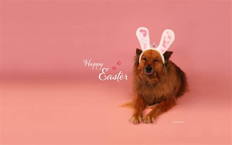 easter breaks with dogs free easter wallpapers desktop backgrounds by kate net