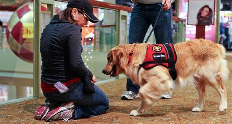 diabetic alert dogs diabetic alert images