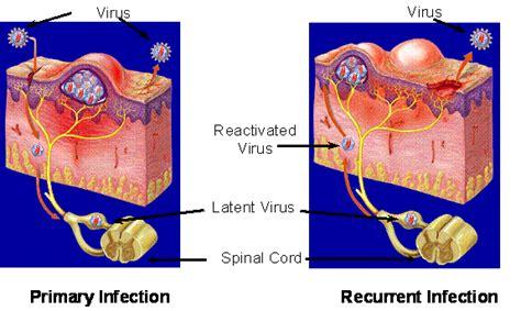 Shedding Of Virus by Virus Shedding Viral Shedding