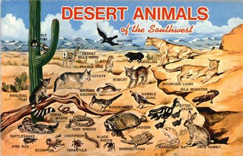 tropical desert animals and plants desert