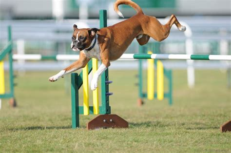 agility for dogs zacton agility home
