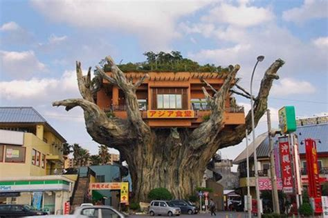 crazy tree houses crazy banyan treehouse cafe takes root in japan inhabitat green design innovation