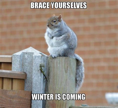 Meme Generator Winter Is Coming - brace yourselves winter is coming winter is coming
