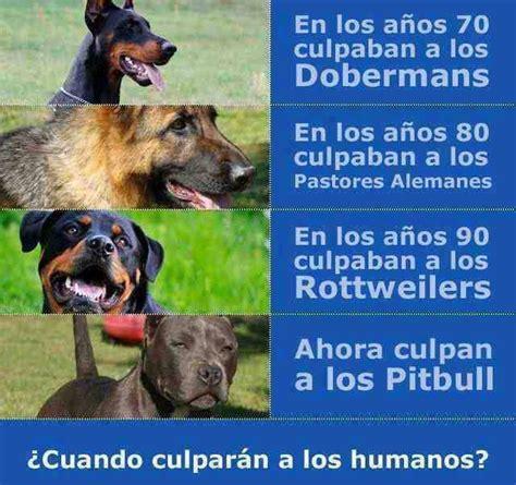 ley de razas de perros peligrosos boo the dogs no existen razas de perros peligrosas sino due 241 os