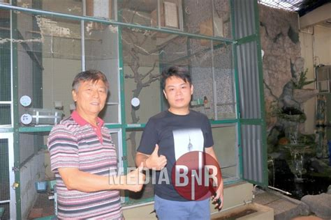 Kaos Burung Kacer Laki Maen Kacer mewarisi hobby sang ayah om steve sukses tangkar murai