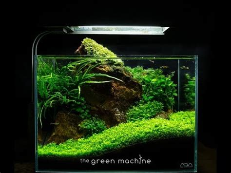 design aquascape pemula aquascape videolike