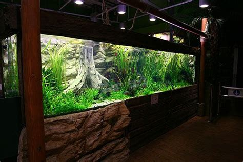 oliver knott aquascaping last day at the amazon by oliver knott 2 aquariums