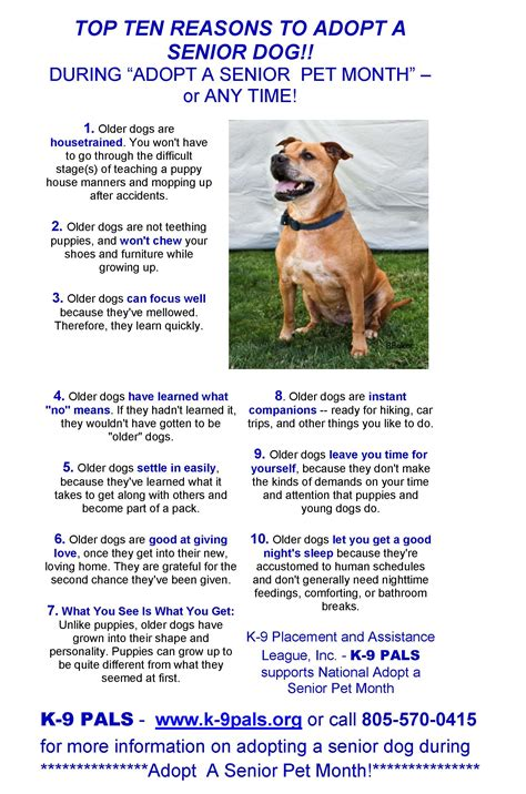 8 Reasons To Adopt A Pet From A Shelter by K 9 Pals