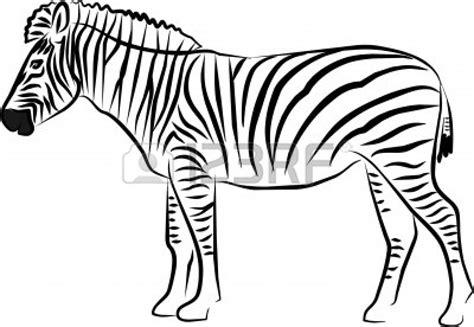 black and white zebra ls zebra clip art black and white clipart panda free