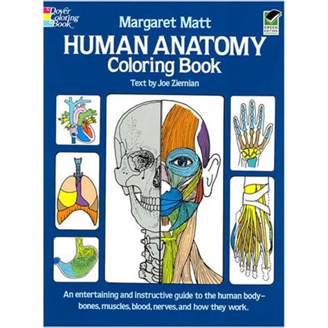 anatomy coloring book blackwells human anatomy coloring book
