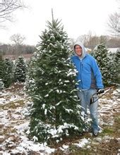 find christmas trees in newberg pnw christmas tree farms