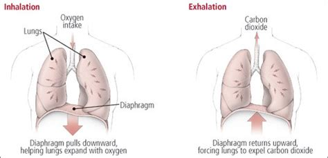correct breathing is essential to good health