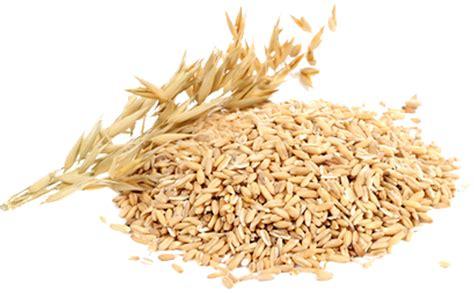 whole grain oats what is whole grain whole grain vs whole wheat
