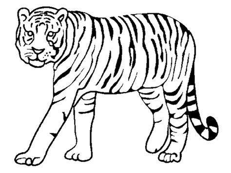 tiger template printable 60 tiger shape templates crafts colouring pages free