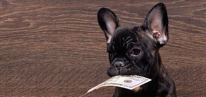 how much to tip groomer which pet care providers should you tip and how much