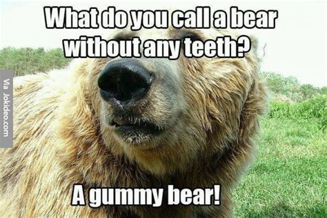 Funny Bear Memes - what do you call a bear without any teeth meme jokes