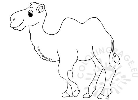 animal coloring pages  hump camel coloring page