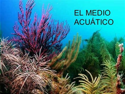 imagenes de jardines acuaticos ecosistemas acu 225 ticos