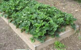 Growing Strawberries In Raised Beds by Photo Tour Of Small Garden Beds Abundant Mini Gardens